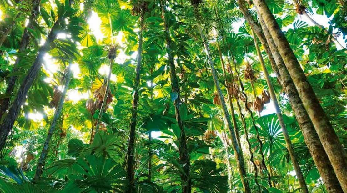 Imagen de una selva tropical